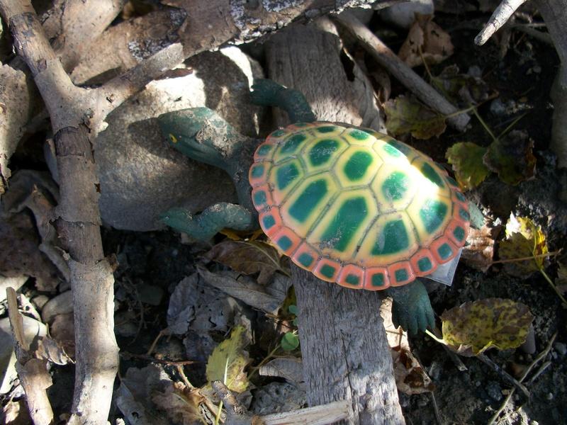Turtle?